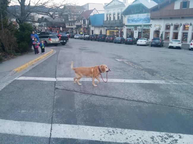 Perros autosuficientes1