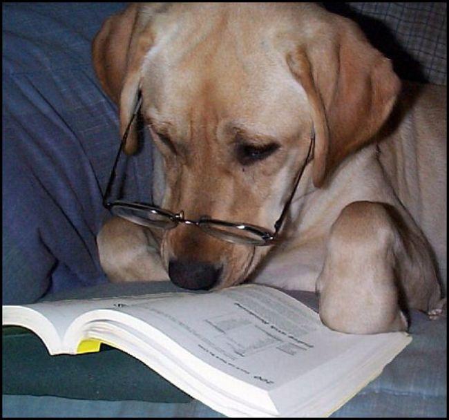 Perros autosuficientes24