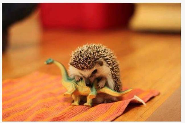 animales adorables intentado ser duros23