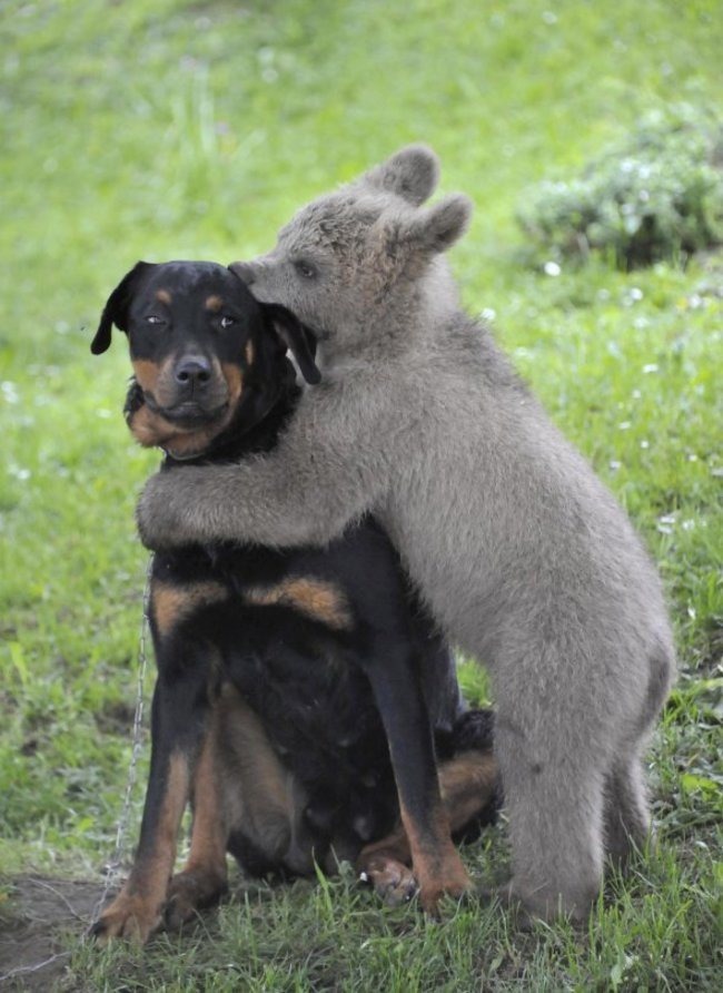 animales adorables intentado ser duros3