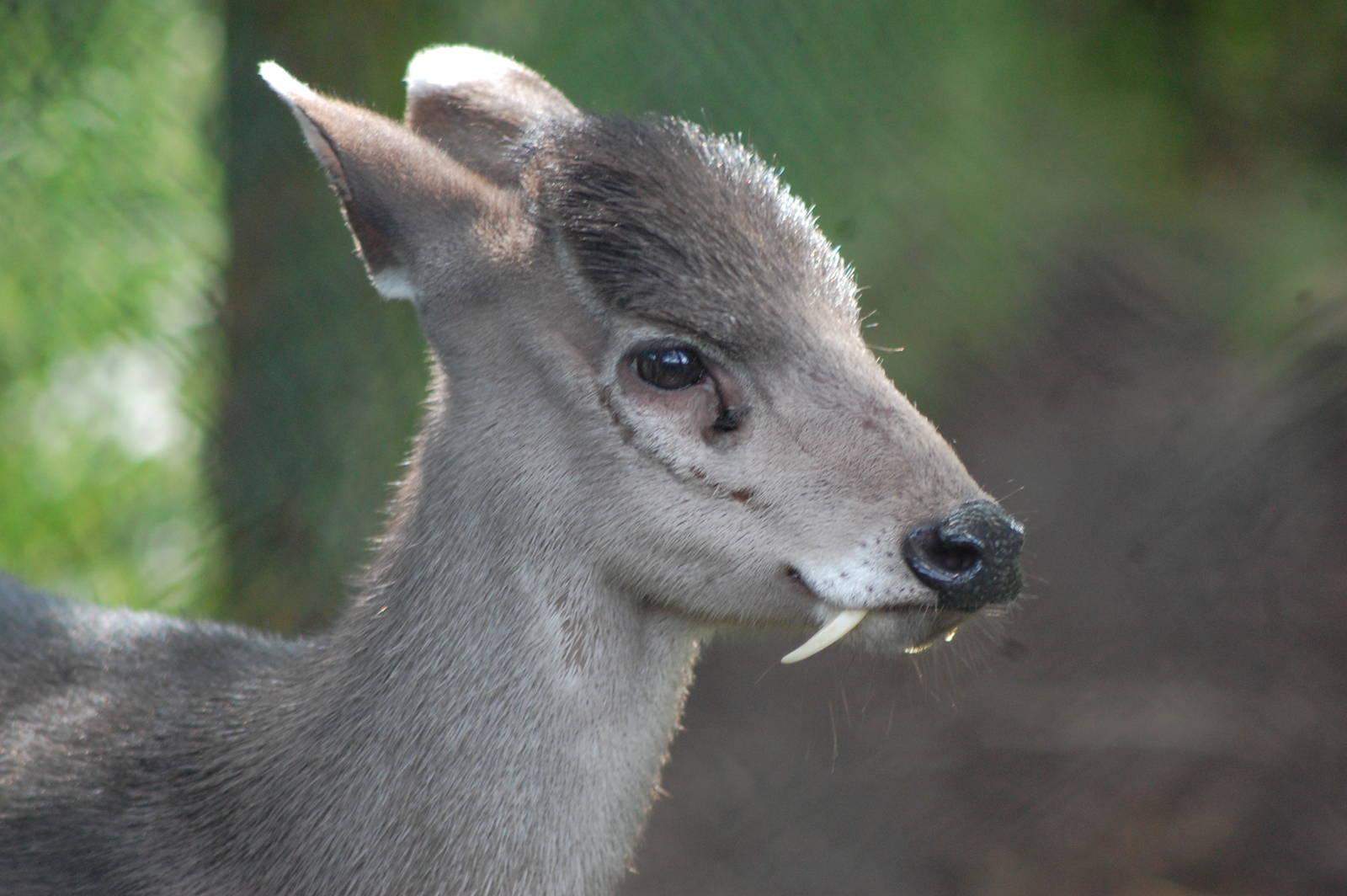 animales desconocidos22