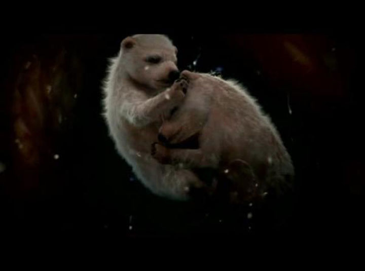 animales en utero2