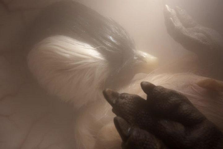 animales en utero9