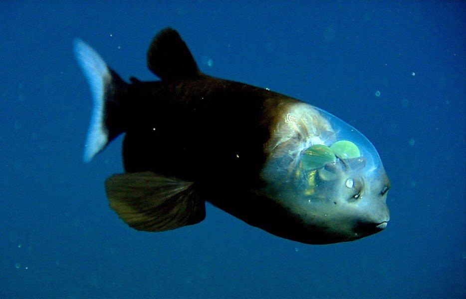 criaturas marinas1