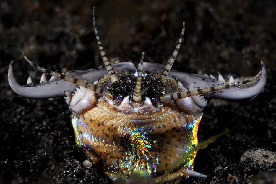 criaturas marinas10