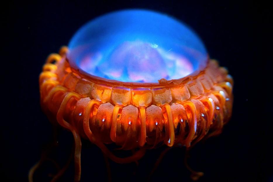 criaturas marinas15