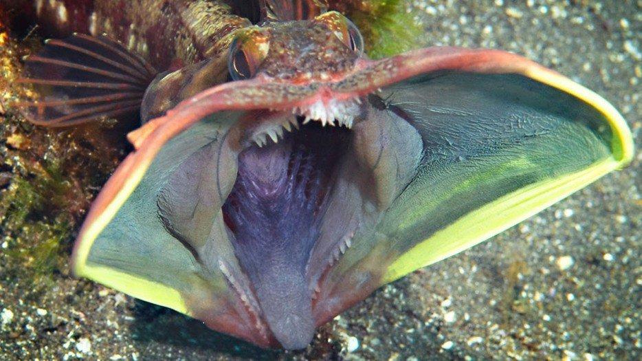 criaturas marinas16