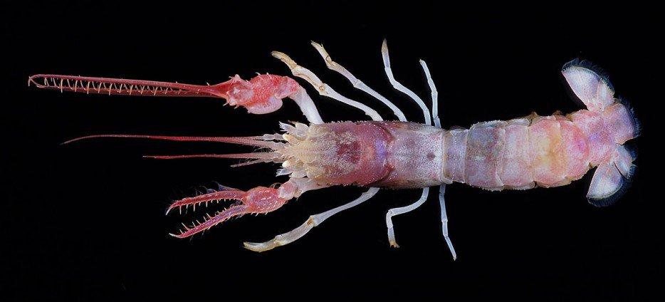 criaturas marinas22