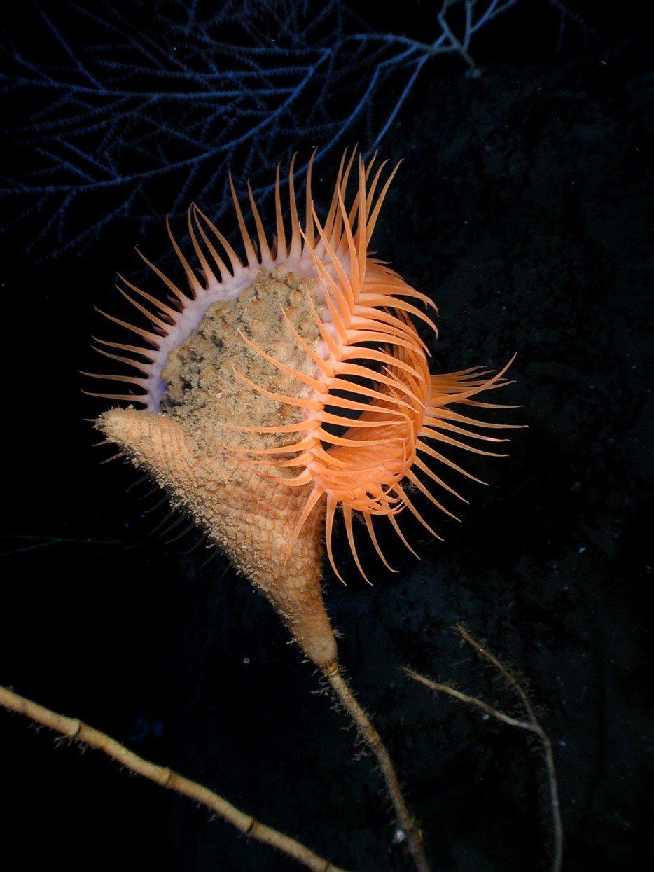 criaturas marinas23