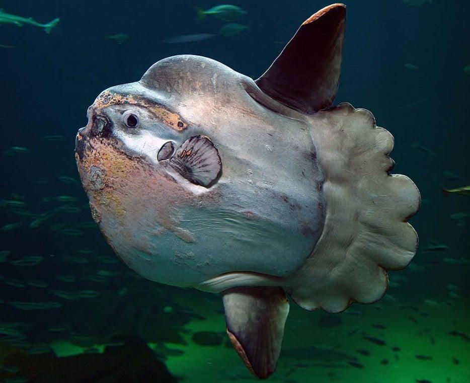 No conoces todos los peces del abismo