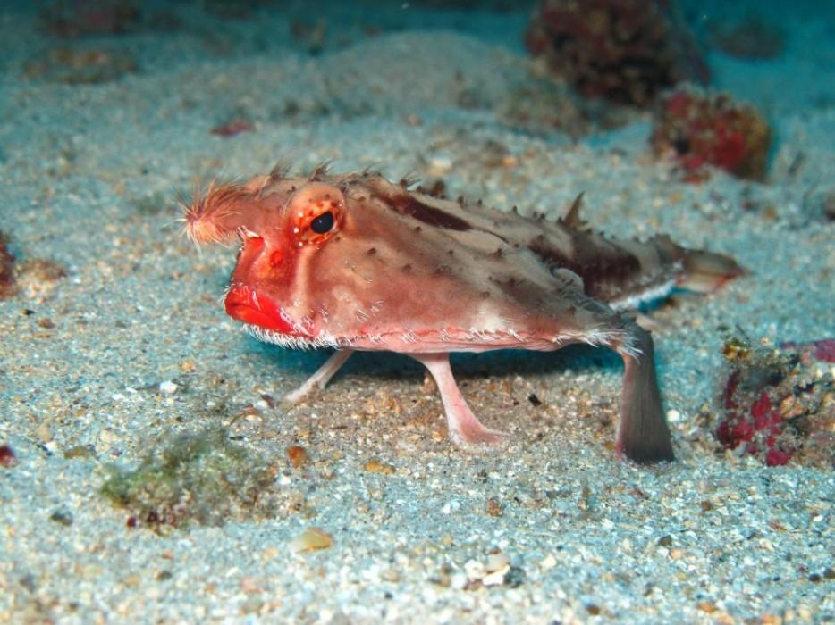 ¡Océanos! Curiosidades y especies extrañas.