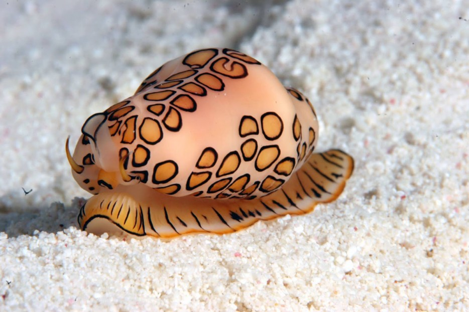26 criaturas extraordinarias de las profundidades.