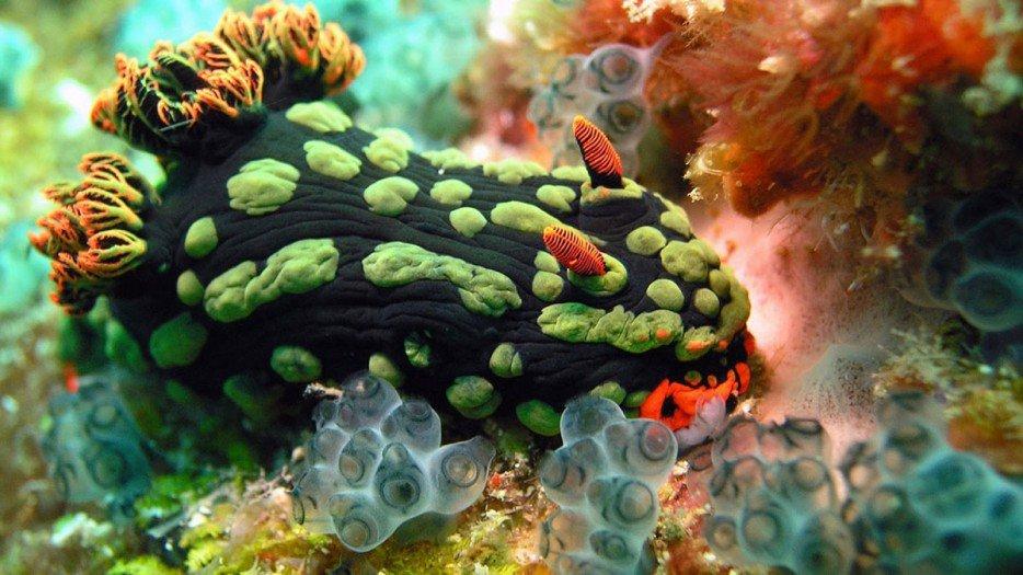 criaturas marinas29