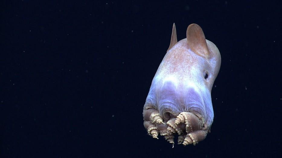 criaturas marinas30