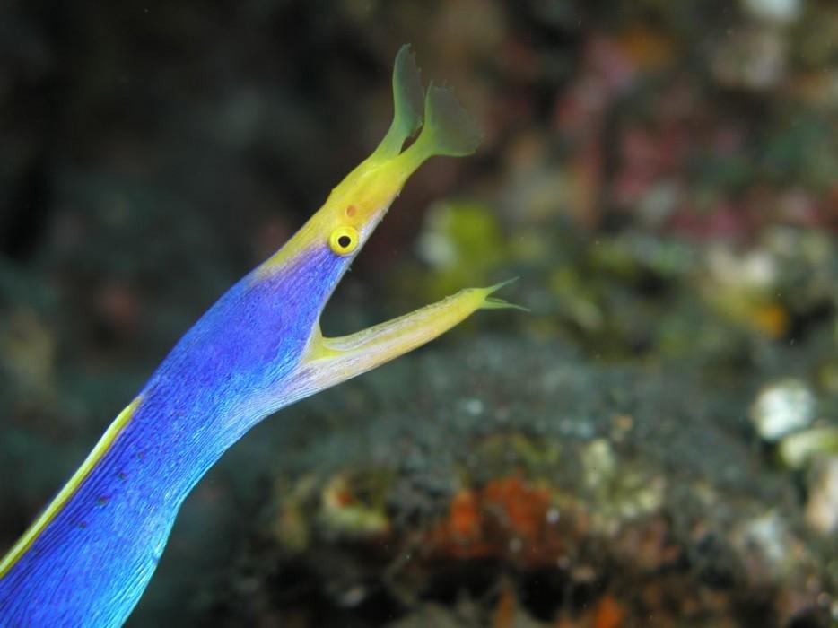 criaturas marinas31