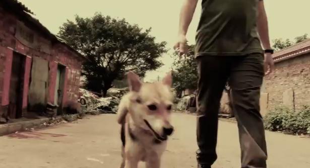 documental-vita-perros-china