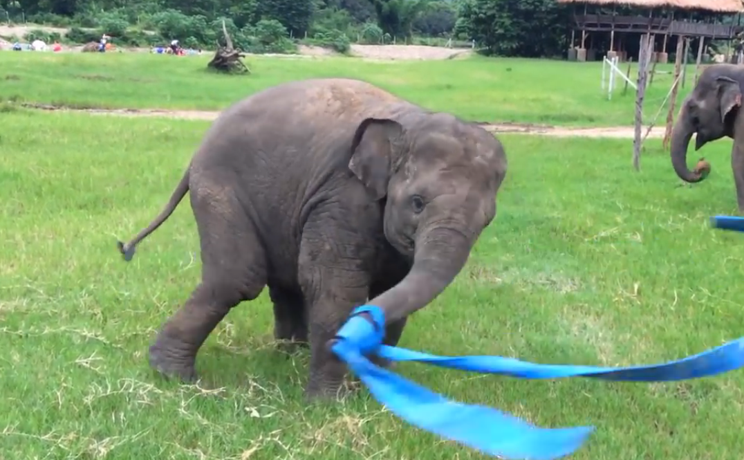 elefante-jugando