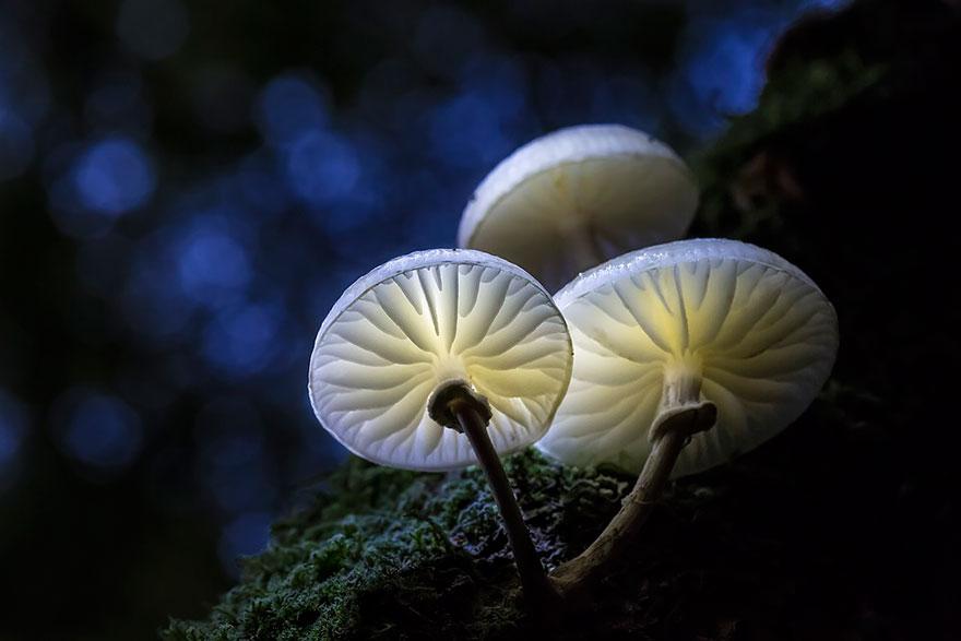 hongos y setas alucinantes10