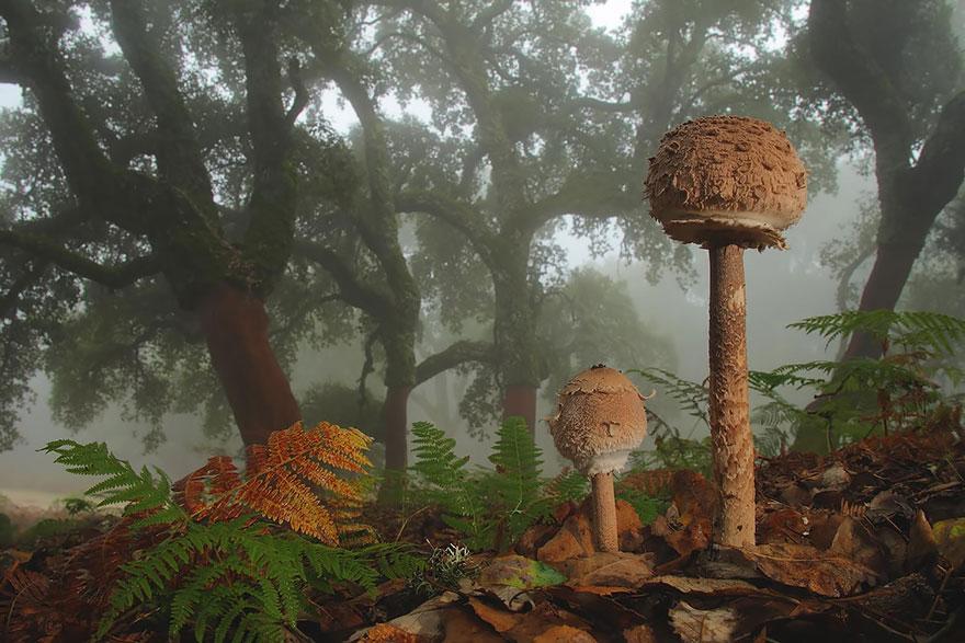 hongos y setas alucinantes14