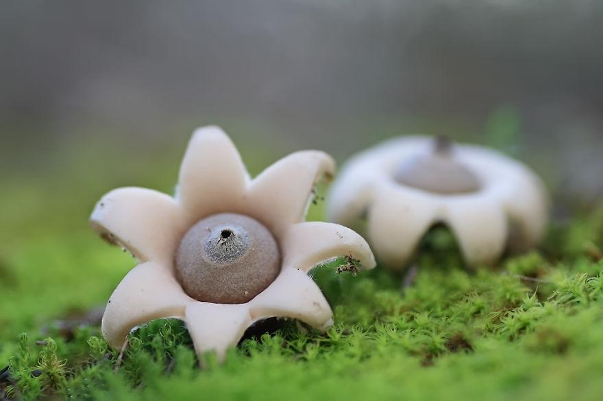 hongos y setas alucinantes19