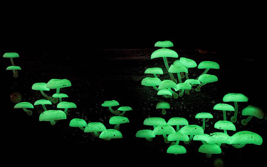 hongos y setas alucinantes2
