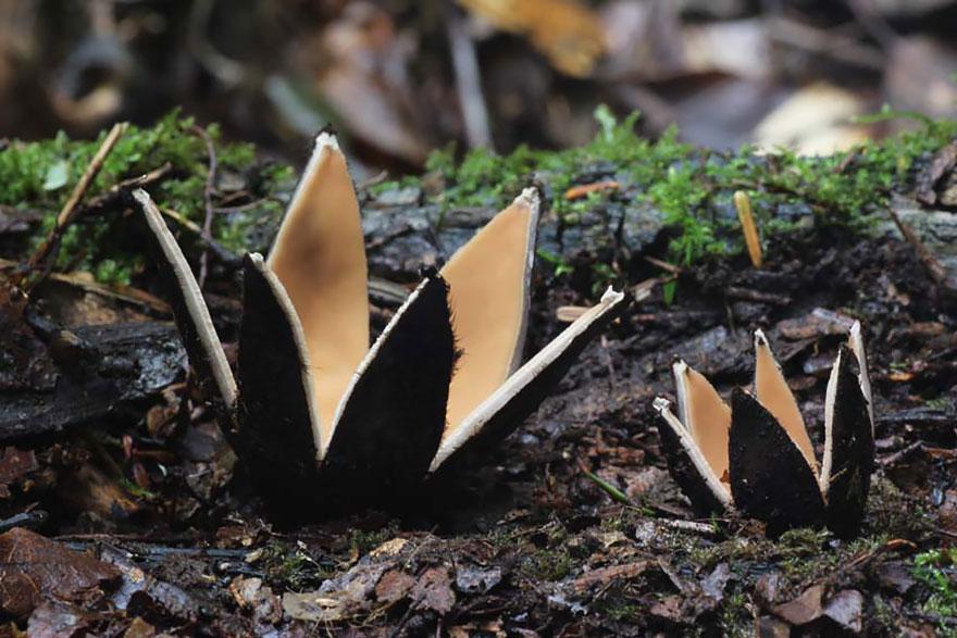 hongos y setas alucinantes23