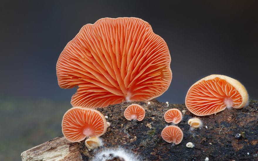 hongos y setas alucinantes24