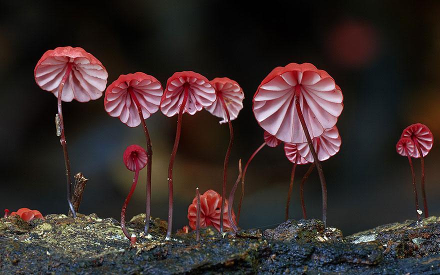 hongos y setas alucinantes3