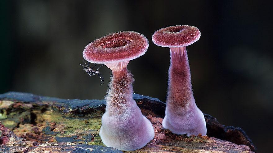 hongos y setas alucinantes8