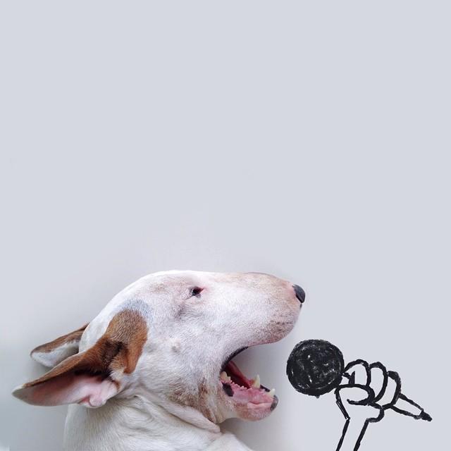 jimmy choo bull terrier ilustraciones 1