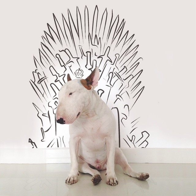 jimmy choo bull terrier ilustraciones 11