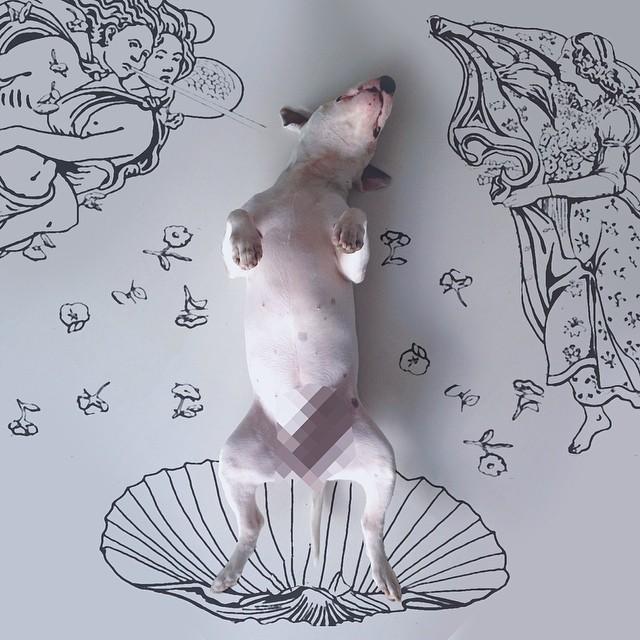 jimmy choo bull terrier ilustraciones 12