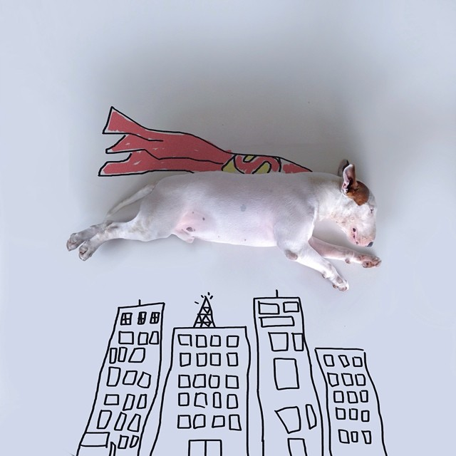 jimmy choo bull terrier ilustraciones 2