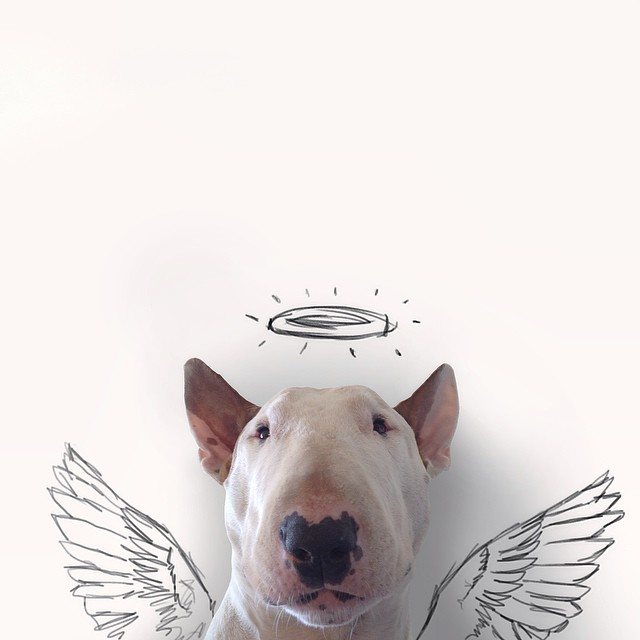jimmy choo bull terrier ilustraciones 7