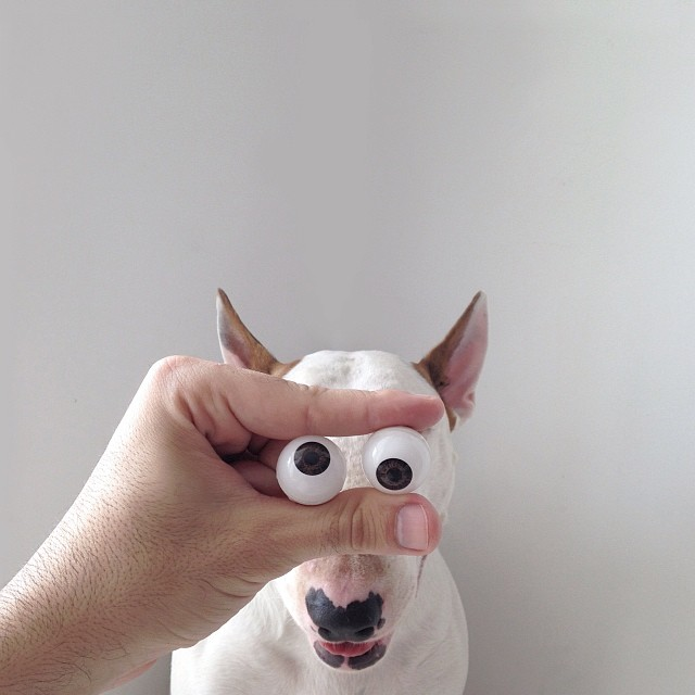 jimmy choo bull terrier ilustraciones 9