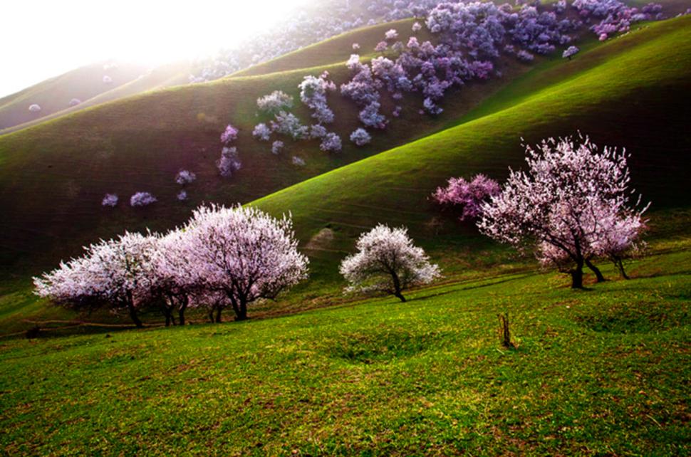 31.-yili-apricot-valley2