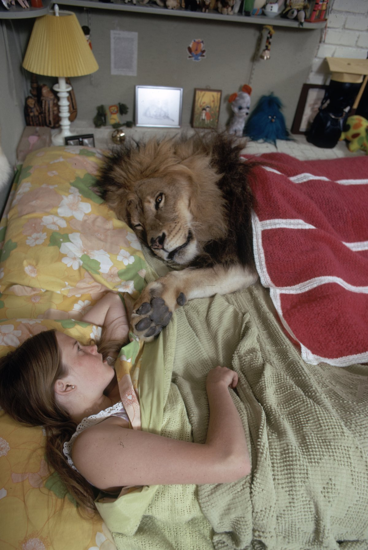 Griffith & Neil The Lion