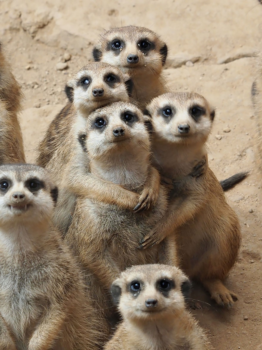 animales adorables20