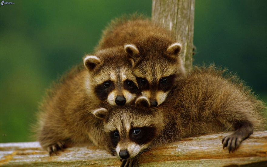 animales adorables31