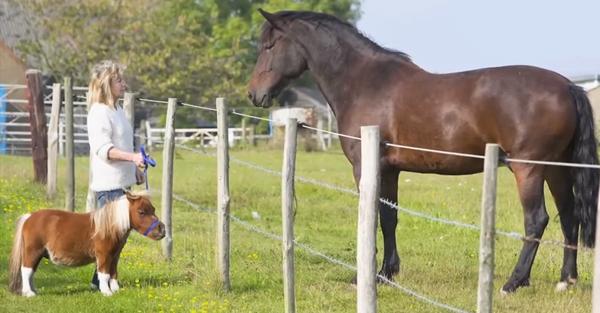 caballo-perro