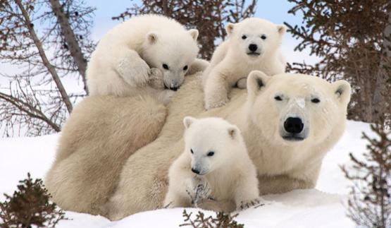familias-animales