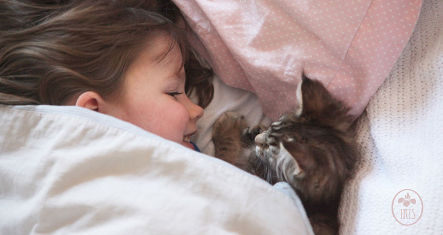 gatito niña autista 14