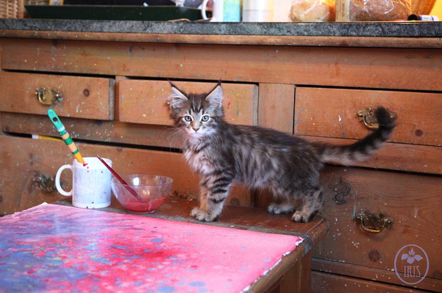 gatito niña autista 20