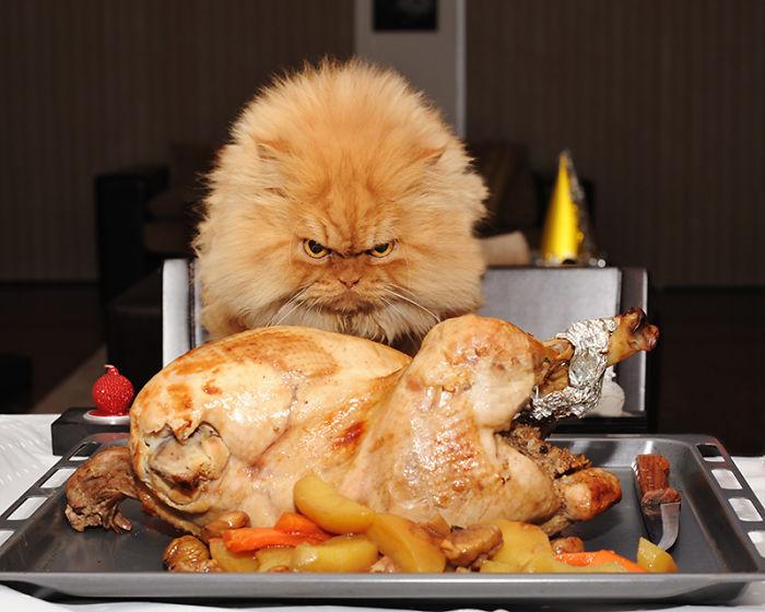 gato-enfadado-1