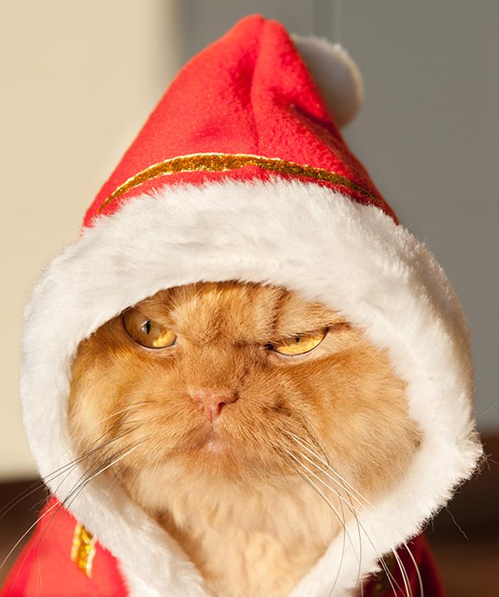 gato-enfadado-10