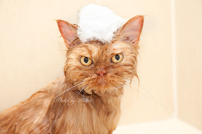 gato-enfadado-11