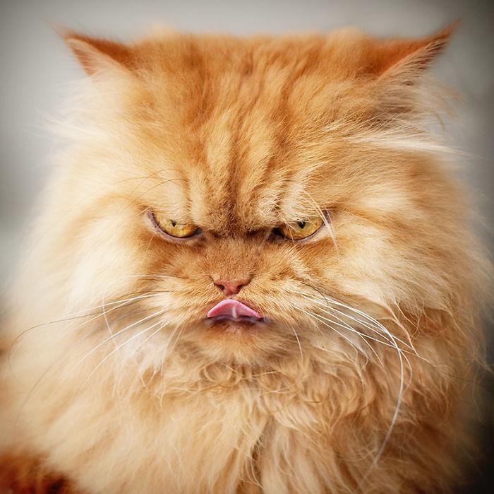 gato-enfadado-12