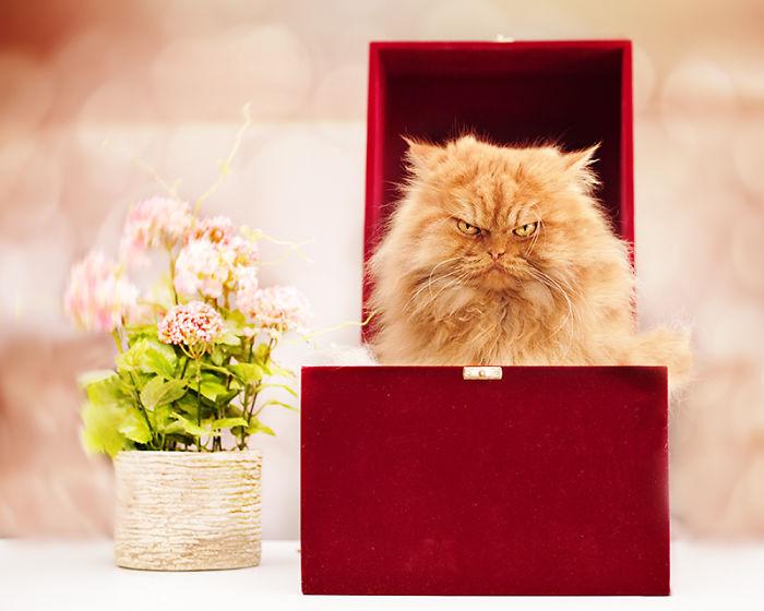 gato-enfadado-13