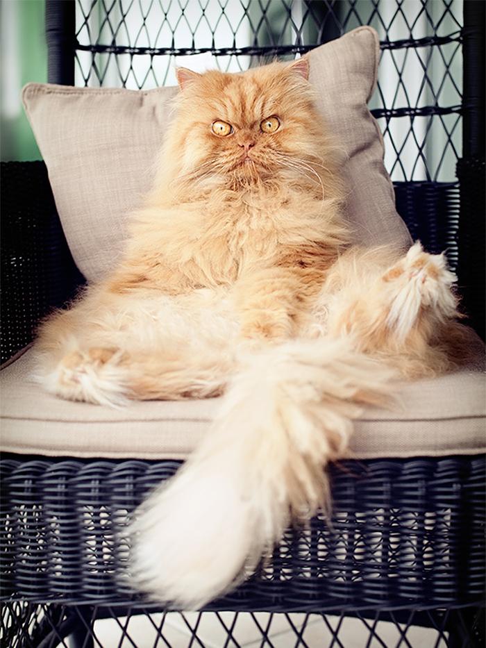 gato-enfadado-14