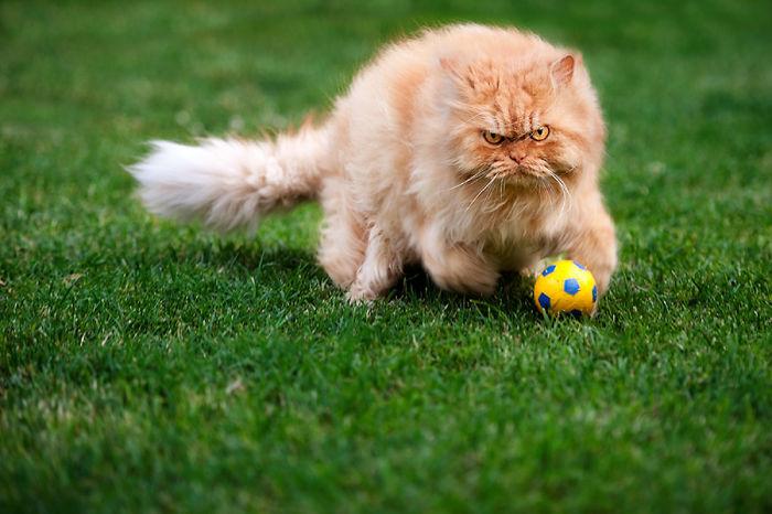 gato-enfadado-15